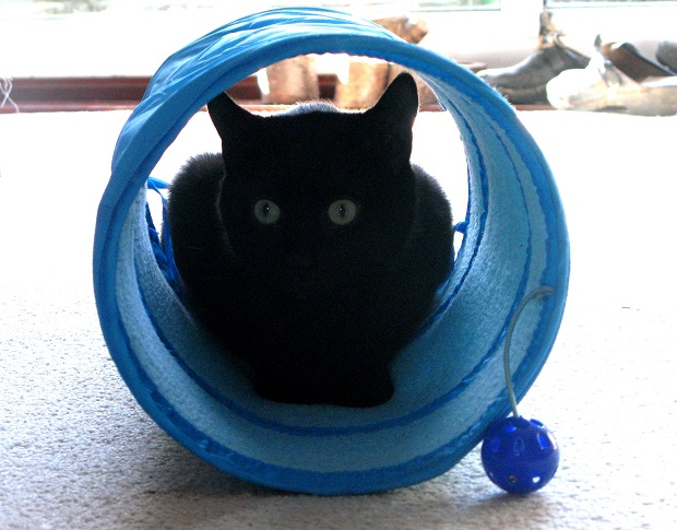 Fluffy in his blue tunnel - m.joy