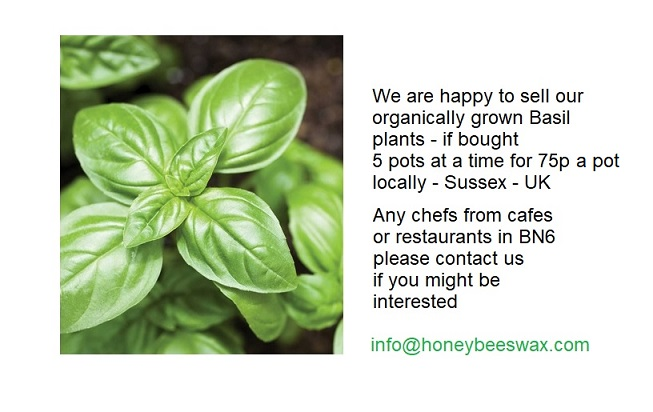 Organically grown Basil Plants available in Sussex