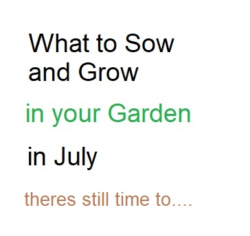 Sow and Grow in your Garden in July (Thompson and Morgan)