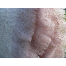 Barn Owl - Mohair Throws
