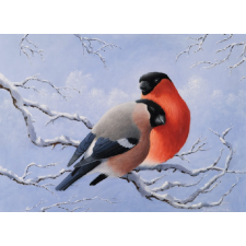 Pair of Bullfinches