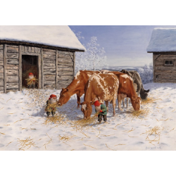 Tomte feeding the red and white Cows